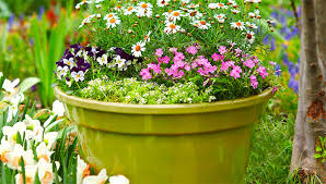 12 container garden combos