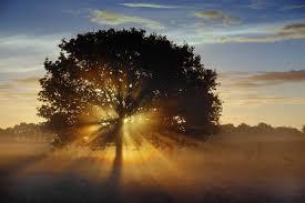 Het is nooit zo dat de natuur het ene zegt en wijsheid het andere