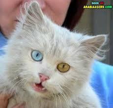 حبايبي القطط Images?q=tbn:ANd9GcSEcYMGuRVOXPoY3JAuCJQkr_61P7ebVY8j8LKy7Nbi0i-kitJ-YA