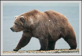 موسوعة الحيوانات البرية .....أدخل و تعرف عليها