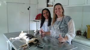Ubatuba (SP) retoma campanha de castração de cães e gatos ...
