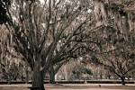 Mesmerized by Stunning, Spooky Spanish Moss Hanging from Ancient Trees lovethesepics.com