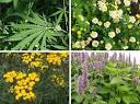 70 Extremely Exotic Plants, Flowers, Forests & Trees | WebEcoist