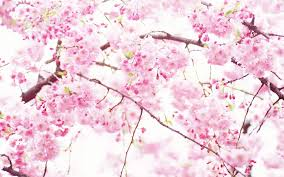 white and pink wallpapers group 72