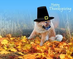 free thanksgiving screen savers thanksgiving desktop backgrounds free wallpapersafari