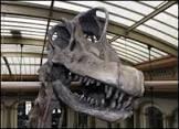 Berlim expõe maior esqueleto de dinossauro já exibido
