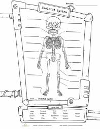 skeleton diagram worksheets skeletons and homeschool