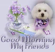 good morning maltese puppy love pinterest maltese dog and