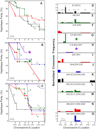 dominant sequences of human major histocompatibility complex