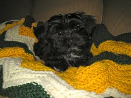 buy a affenpinscher cr puppy love your breeder network finder working to place the