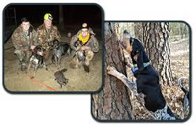 bluetick coonhound oregon dog kennel greenville nc blackjack bluetick kennel