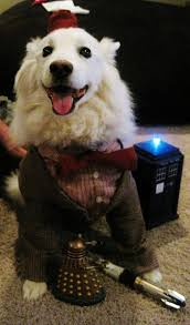 american eskimo dog lion cut 20 adorable ways to embarrass your pet this halloween