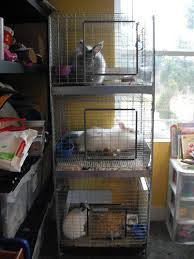exclusively rabbits cage care for indoor bunnies and stacker cages