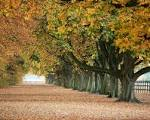 Wallpapers Backgrounds - Previous Nature Seasons Autumn Yellowing leaves trees wallpaper