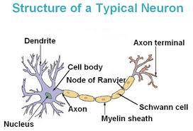 andreea vass si neuronul
