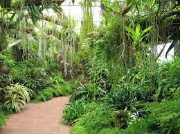 tropical plants for home and garden margarite gardens