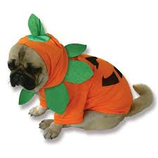 Dog Costumes Halloween Cutest Halloween Dog Costumes Inspired Food Today