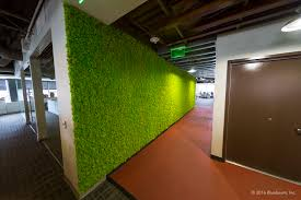 cool moss walls are the hottest trend in green living
