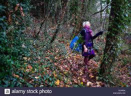aberystwyth wales uk 21st dec 2014 a woman gathering holly