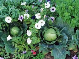 vegetables you can plant now for fall harvest hgtv