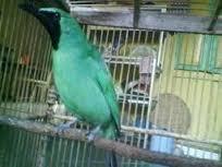 kicau mania magelang - Magelang - Kegiatan Komunitas - 1297438935_165812555_2-kicau-mania-magelang-Magelang