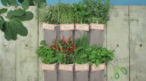 Vertical Garden Vegetables by How To Make A Vertical Garden Using A Shoe Organiser Tesco
