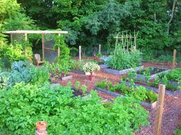 How To Keep Deer Out Of Vegetable Garden by Creating A Raised Bed Garden