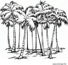 coloriage palmier difficile adulte dessin
