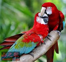 Train Talk Bird Images?q=tbn:ANd9GcSQOOVb-S_-8WZ1qa9isBZxx0BGVAmFLDhwyhIi6CjOHLnvUpcS