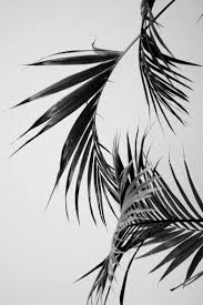 Wallpaper Black And White by Best 25 Black N White Wallpaper Ideas On Pinterest How To