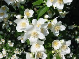لوكانت لديك زهرة بيضاء من يستحقها بنظرك - صفحة 2 Images?q=tbn:ANd9GcSQhUyJT8MiJHjq01qybnsMhXyL8_YWSJ5d1XEQZ6BKH-3daeyu