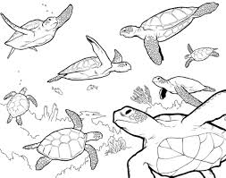 innovative sea turtle coloring page coloring d 8635 unknown
