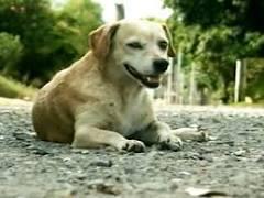 Abandono de animais aumenta nos meses de verão em Santa Maria
