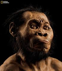 Remains of new human species found in South Africa cave   The     This March      photo provided by National Geographic from their October      issue shows a reconstruction