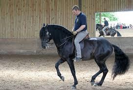 TdoT bei Eddy Willems - Bild \u0026amp; Foto von Ellen Vierhaus aus Pferde ... - 9536597