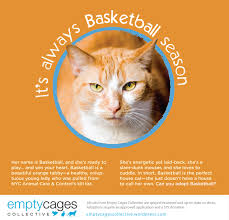 empty cages collective news