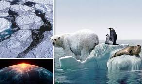 images about Global Warming on Pinterest   Ruins  Bill nye     polarbearscience