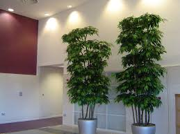 Decorative Home by Artificial Indoor Plants For Home Artificial Lighting Trees