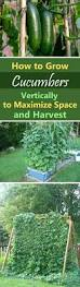 Vertical Garden Vegetables by 663 Best Gardening Images On Pinterest Organic Farming