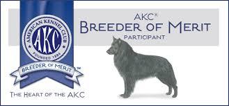 belgian sheepdog breeders in texas black gold belgian sheepdogs groenendael breeder of quality