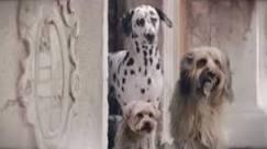 Comercial para cachorros estreia na TV britânica
