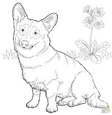 tadpole coloring page corgi coloring pages corgi coloring pages download and print for