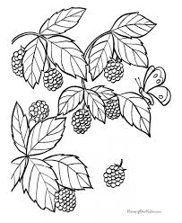 ontario berry growers association for kids