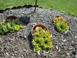 Small Rock Garden Pictures by Best Stone Landscaping Ideas On Pinterest Landscape Near Me Stones