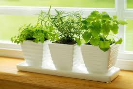 spice up your meals with an indoor herb garden sela investments
