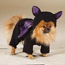 Bat Costumes Halloween 47 Halloween Costumes Dog Thefashionspot