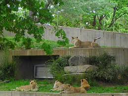 My recent visit to Vandalur Zoo  Chennai Kerala Travel Destinations   Manoramaonline Essay Writing  screenshot