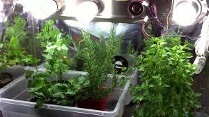 indoor garden tips growing herbs indoors in containers with grow