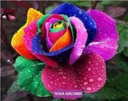 Resultado de imagen para El color del amor, imagenes
