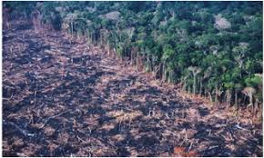 Human activity has had a major negative impact upon tropical rainforests  Threats such as logging  cattle industries  creating roads and agriculture all     Tropical Rainforests